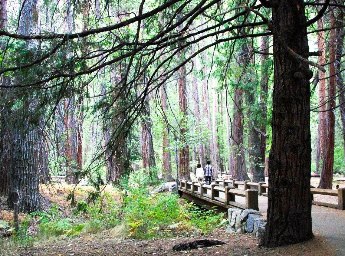 Bridge at Merced River, Yosemite